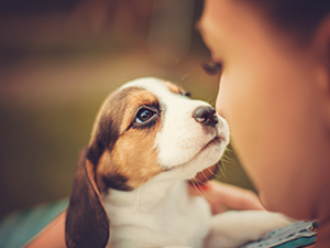 Carpet Owner's Puppy Potty Training Tips